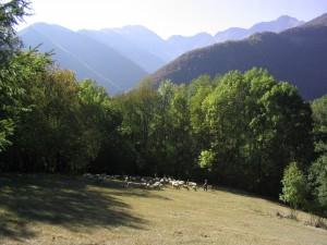 Troupeau de moutons et Montagne dans le Biros
